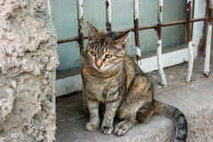 Oney Cat On Windowsill Outside Royalty Free Stock Image