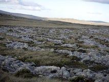 ongastvrij landschap van Stanley Island, Falkland Islands - Malvinas royalty-vrije stock afbeeldingen