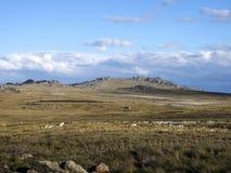 ongastvrij landschap van Stanley Island, Falkland Islands - Malvinas stock foto's