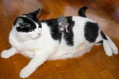Ongebruikelijke BFF-huisdieren Royalty-vrije Stock Fotografie