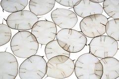 Ongebruikelijke bladeren met een uiteinde in backlight Textuur van bladeren op witte achtergrond wordt geïsoleerd die Ecostijl, n Royalty-vrije Stock Foto's