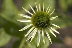 Ongebruikelijke bloem Stock Foto's