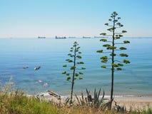 Ongebruikelijke bomen die container en vrachtschepen overzien Stock Fotografie