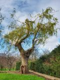 Ongebruikelijke boom in het park van Dublin Royalty-vrije Stock Afbeeldingen