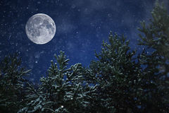 Ongebruikelijke manen in de winterbos Stock Fotografie