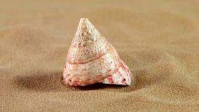Ongebruikelijke roze oceaanshell met zand op zwarte, rug stock footage