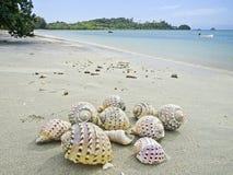Ongebruikelijke zeeschelpen op het witte zand op de kust van het overzees de kleur van azuurblauw stock foto's