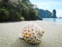 Ongebruikelijke zeeschelpen op het witte zand op de kust van het overzees de kleur van azuurblauw royalty-vrije stock foto