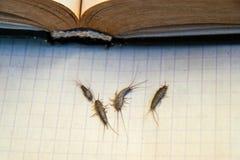 Ongedierteboeken en kranten Insect het voeden op papier - zilvervisje van verscheidene stukken dichtbij het open boek stock foto's