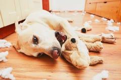 Ongehoorzaam hond alleen huis royalty-vrije stock foto