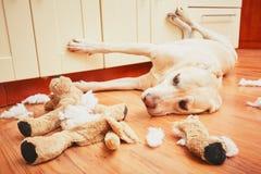 Ongehoorzaam hond alleen huis royalty-vrije stock afbeelding