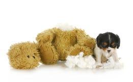 Ongehoorzaam puppy Stock Foto's
