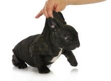 Ongehoorzaam puppy royalty-vrije stock afbeeldingen