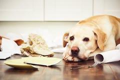 Ongehoorzame hond stock fotografie