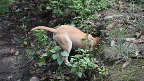 Ongehoorzame hond stock video