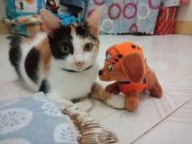 Ongehoorzame kat met haar stuk speelgoed stock foto