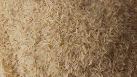 Ongekookte duidelijke rijstkorrels stock footage