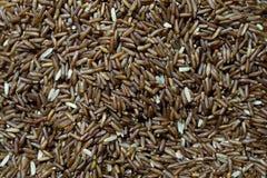 Ongekookte ongepelde rijst Stock Foto's
