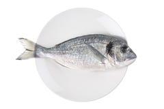 Ongekookte vissen (sparusauratus) op een plaat Stock Afbeeldingen