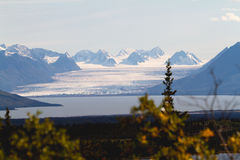 Ongelooflijke Gletsjer die in Meer morsen Royalty-vrije Stock Afbeeldingen