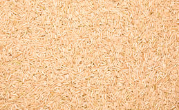 Ongepelde rijst Royalty-vrije Stock Afbeelding