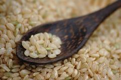 Ongepelde rijst Royalty-vrije Stock Foto's