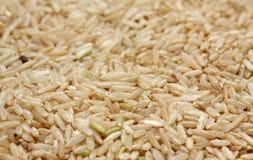 Ongepelde rijst Royalty-vrije Stock Foto