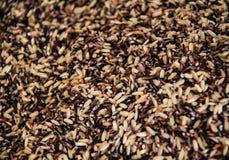 Ongepelde rijst Het heeft een mild nootachtig aroma, is taaier en voedzamer dan witte rijst Royalty-vrije Stock Foto's