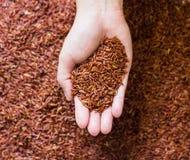 Ongepelde rijst op Hand Royalty-vrije Stock Afbeelding