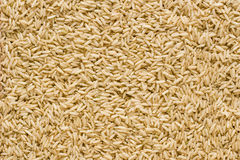 Ongepelde rijstachtergrond Royalty-vrije Stock Fotografie