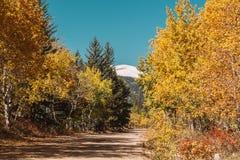 Ongeplaveide weg bij de herfst zonnige dag Royalty-vrije Stock Fotografie