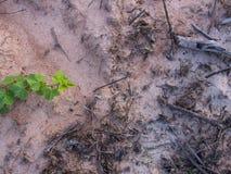 Ongewenste Flora Ivy stock foto