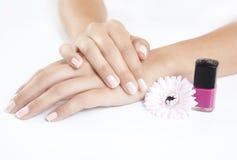 Ongles manucurés avec le vernis à ongles photographie stock libre de droits