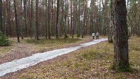 Onherkenbare bejaarde mensen die met trekkingspolen op stijging in bos lopen stock footage