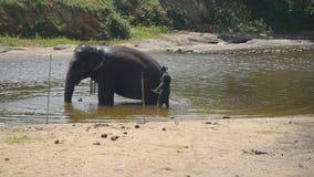 Onherkenbare de wasolifant van de mahoutmens in rivier Een grote Afrikaanse olifant baadt in meer Langzame Motie stock videobeelden