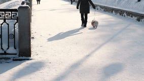 Onherkenbare vrouw die met een kleine hond op een leiband in een snow-covered de winterpark lopen Achter mening stock videobeelden