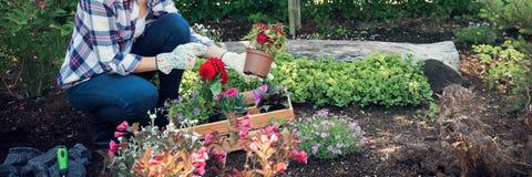 Onherkenbare vrouwelijke tuinman die mooie bloem klaar houden om in een tuin worden geplant Het tuinieren concept royalty-vrije stock afbeelding