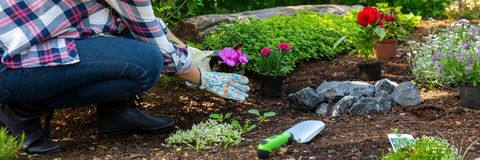 Onherkenbare vrouwelijke tuinman die mooie bloem klaar houden om in een tuin worden geplant Het tuinieren concept stock afbeeldingen