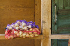 Onion. Harvested onion in net bag Stock Image