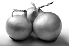 Onion. Black and white image of three onions Stock Photos
