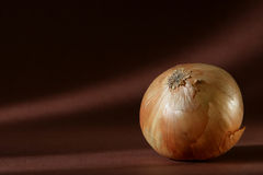 Onion. See one onion on brown background Royalty Free Stock Image