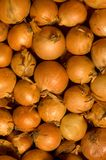 Onion. Background of gold and orange onions Stock Photography