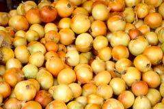 Onion Royalty Free Stock Photos