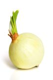 Onion. On a white background Stock Photos