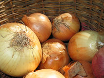 Onion. Fresh onions in a basket Stock Image