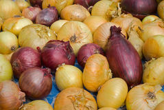 Onion 16 Royalty Free Stock Photography