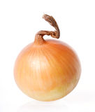 Onion. Isolated on white background royalty free stock photography