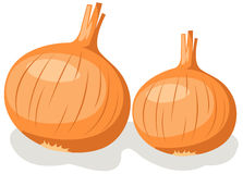 Onion stock illustration