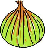 Onion. Isolated on white drawn in toddler art style Royalty Free Stock Image