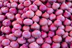 Onion. Bunch of fresh purple onions stock photo